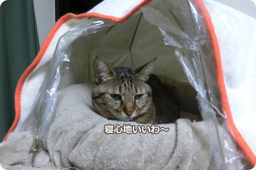 貝殻ベッド